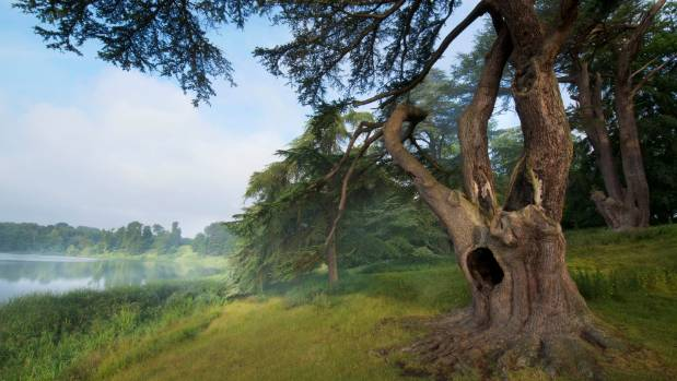 A tree featured in the Harry Potter film in the grounds of Blenheim Palace, Woodstock, Oxfordshire.