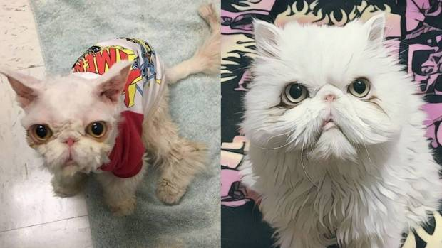 How Sinbad thrived: the newly shaved rescue cat and the fine-looking character he is now.