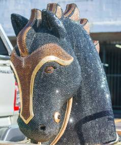 In May, drug sqaud police detectives put on display the horse head used to import the record cocaine haul.