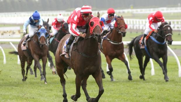 Chris Johnson will once again team up with Flying Ibis at Riccarton on Friday.