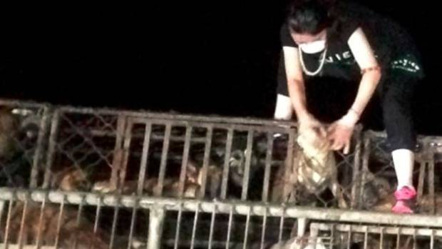 A dog truck stopped by animal welfare activists near Beijing.