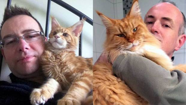 Lord Viking (left) and Princess Wanda are frequent stars of Furry Friday, due to their stunning Maine Coon looks and the ...