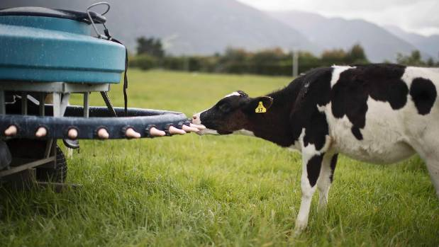 A Fonterra ingredient has been developed from cows' milk to help deliver complex milk lipids in infant formula.
