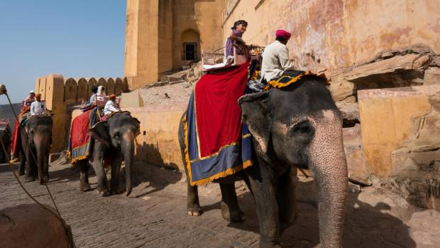 There is building pressure to ban elephant rides up the Amer Fort.