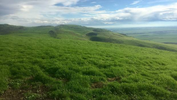 The property consists of 40ha of flats, 700ha of steep hill country and the rest is rolling country.