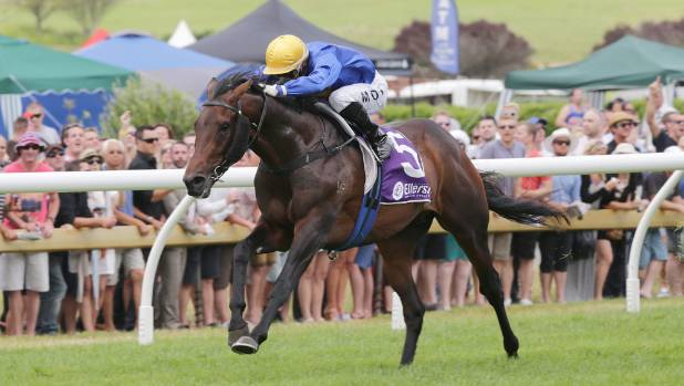 Former Derby winner Puccini will return to New Zealand to stand at stud.