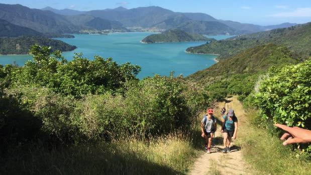 The Queen Charlotte Walk is one of New Zealand's most popular multi-day walks.