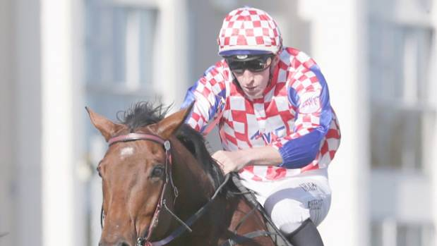 Fair Script will carry the colours of the Croatian flag in the Waikato Steeplechase at Te Rapa on Saturday.