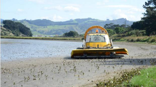 A mower hovercraft has been purpose-built to manage mangrove seedlings around Tauranga Harbour.