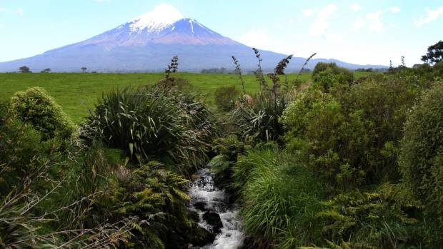 Myrtle rust infections threatens riparian planting plan in Taranaki