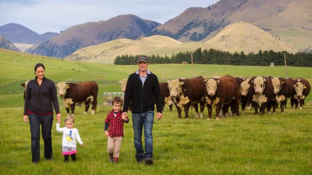 James and Georgina McKerchar with their son Lachie, 5, and daughter Olivia, 2, and their hereford bulls.