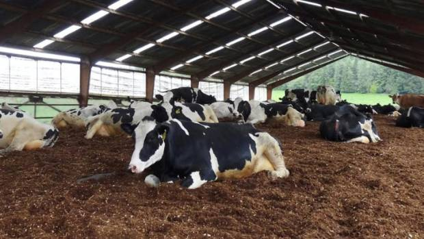 Lessons can be learned from Europe and the United States, where hybrid operations combining grazing and barn systems are ...