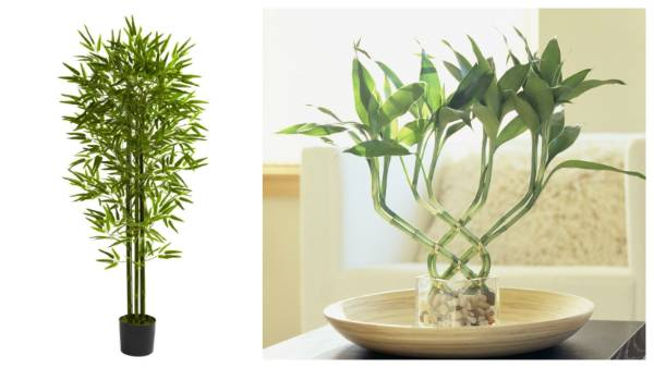 top 3 trends for indoor plants. Black Bedroom Furniture Sets. Home Design Ideas