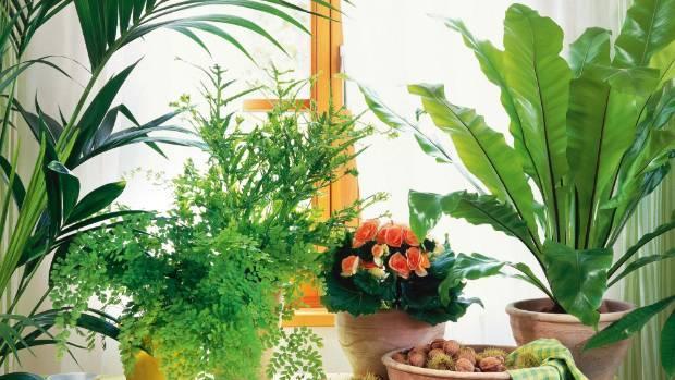 Top 3 Trends For Indoor Plants