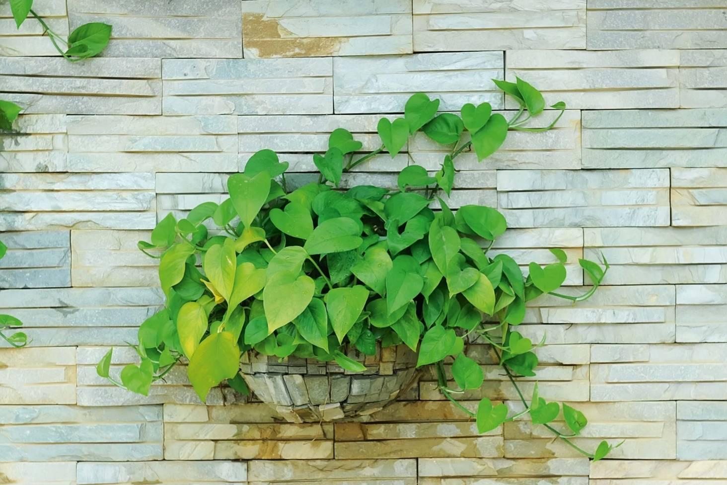 Top 3 trends for indoor plants | Stuff co nz