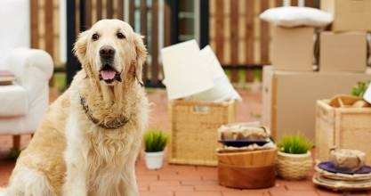 Moving house? These expert approved tips will ensure your furry friends move is as stress-free as possible.