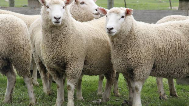 The objective of the competition is to select the flock replacements that are likely to be more productive and ...