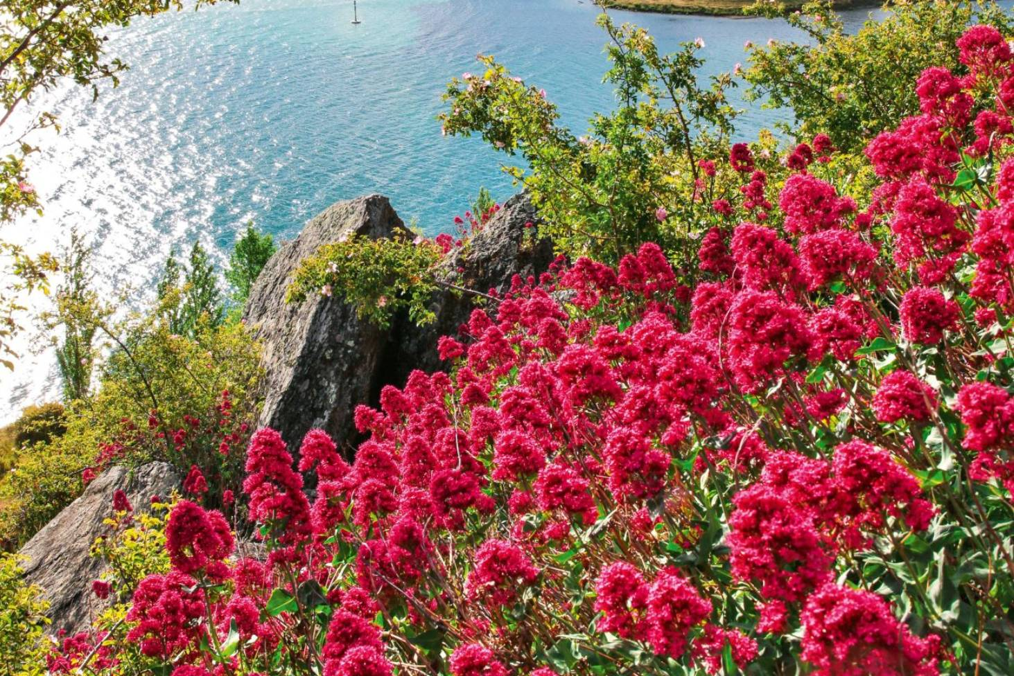 Top 5 Places To See Wildflowers In New Zealand Stuff