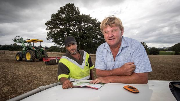 Brookes Cooper, head shepherd and Lloyd Brennan, manager of the Omapere Rangihamama Trust farm near Kaikohe.