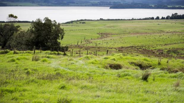A unique feature of the Omapere Farm is that the farm borders the only Maori owned lake in New Zealand. This is ...