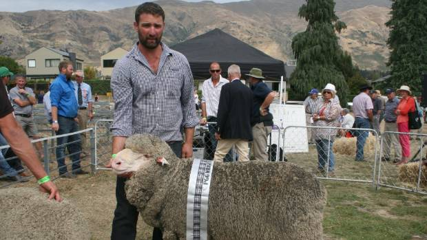 Simon Paterson holds a polled merino ram, the supreme champion exhibit in the merino fine wool section of this year's ...
