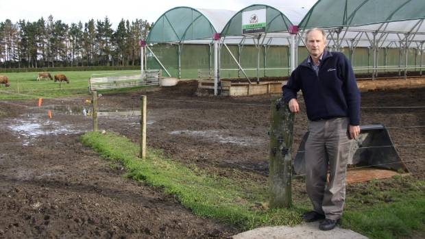 Stratford Demonstration Farm supervisor Graeme Ptiman  outside the covered stand-off and feed pad at the East Rd property.