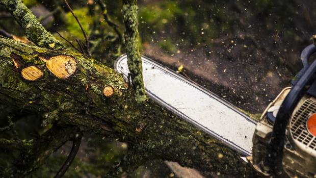 Chainsaw accidents caused serious pain to 1855 people last year.