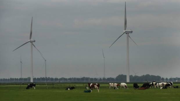 Cows and wind turbines epitomise the Netherlands countryside. Keith Woodford column.