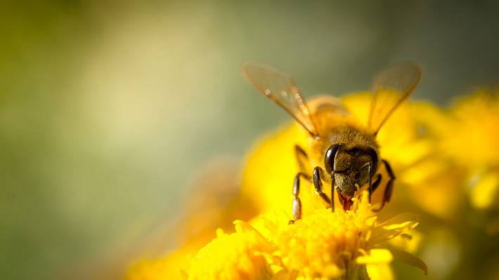 Column: Planting the right trees to bring back the bees