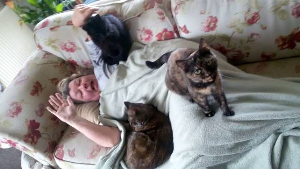 Bopor, Spiffy and Pinky are mountaineer cats: they climb you because you're there.