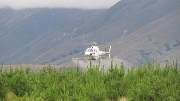Aerial boom spraying on wilding conifers on Pukaki Downs in the Mackenzie Basin.