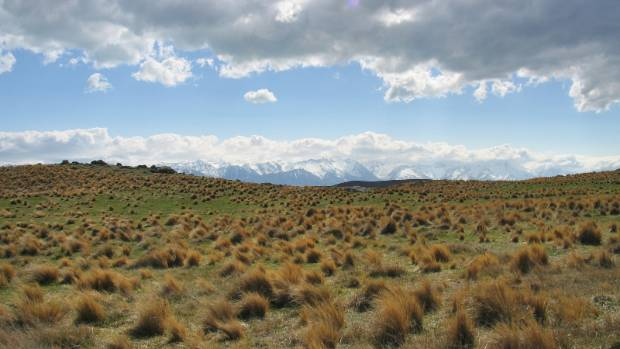 The iconic golden landscape of the Mackenzie Country. A massive 137,000ha of the Godley area of the Mackenzie Basin has ...