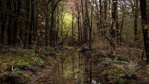 Is the stillness and solitude of the New Zealand bush at risk?