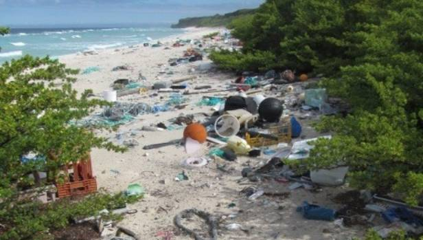 Flotsam and Jetsam washed to the top of the high-tide mark on East Beach, Henderson Island.