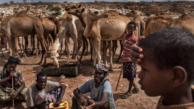 Somalia is currently on the brink of famine with over half of the country's population facing acute food insecurity ...