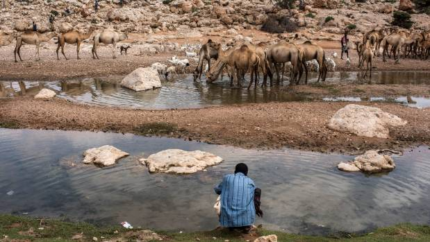 A man draws water from a nearly dried up riverbed in Dhudo, Somalia. People travel up to 75 kilometres to get water, as ...