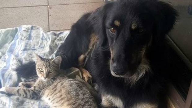 Cats and dogs can get along with each other as well as they get along with humans.