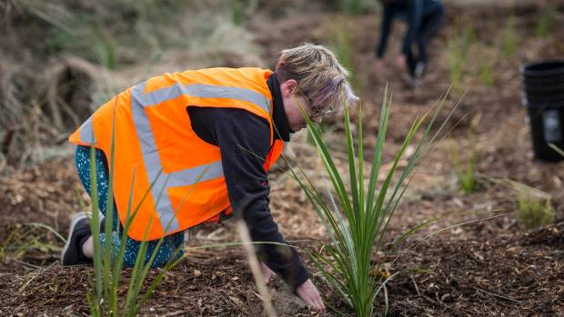 The work of the Student Volunteer Army continues, with a crew out planting on Anzac Day this year.  The student army, ...