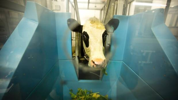 Research on livestock has been carried out in laboratories; now scientists are going to test greenhouse gas emissions on ...