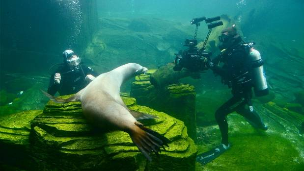 Steve Hathaway filming seals for TV Show The Zoo.