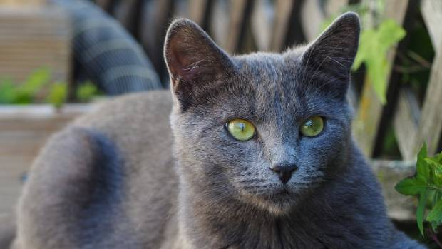 Ball and O'Connor fostered Juno through Christchurch Cat Rescue and ended up keeping her.