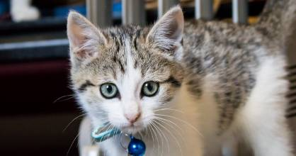 Some of the cats at the planned cafe will be available for adoption.