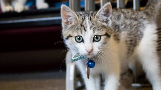 Plans are underway for Christchurch's first cat cafe.