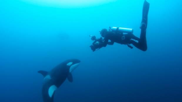 Steve Hathaway filming orca