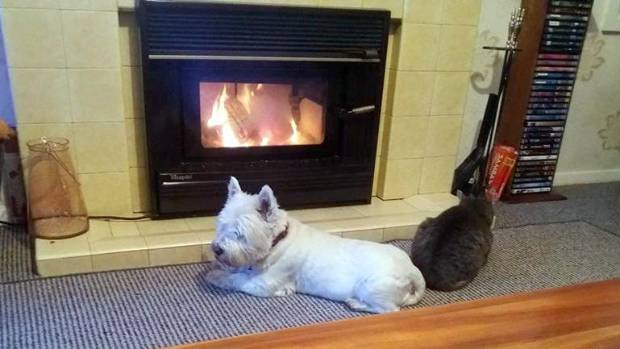 The body language is coolish, but the temperatures are toasty for Archie and Gizmo.