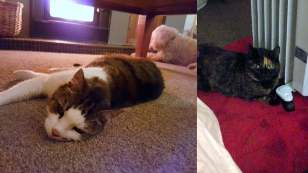 Miss Molly and Lachie are felled by the fire's blast (left). Meanwhile, Pepper might like the glamour of a fire, but a ...