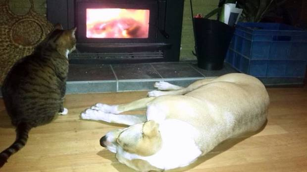 Fireside companions: Teasel and Bess.
