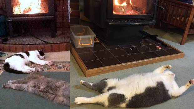 Melting mogs: Taz and Molly are two furry, hot messes (left) while Wally is more or less a furry puddle.