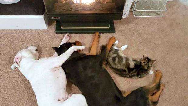 Basting themselves in the fire's glory: Annie,  Ivy and Kobe.