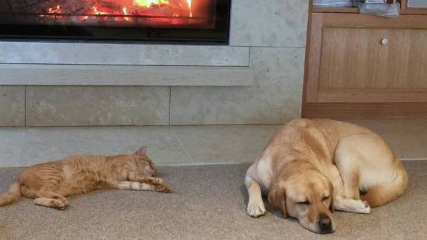 Griffin and Rosie are a perfect pair of hearth accessories.